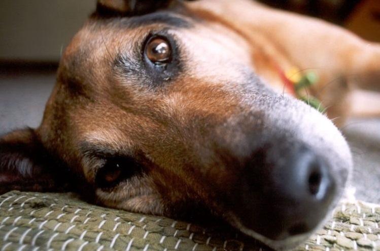 судороги у собак мелких пород
