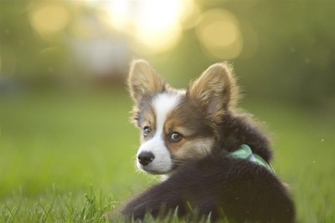 конвульсии у собаки
