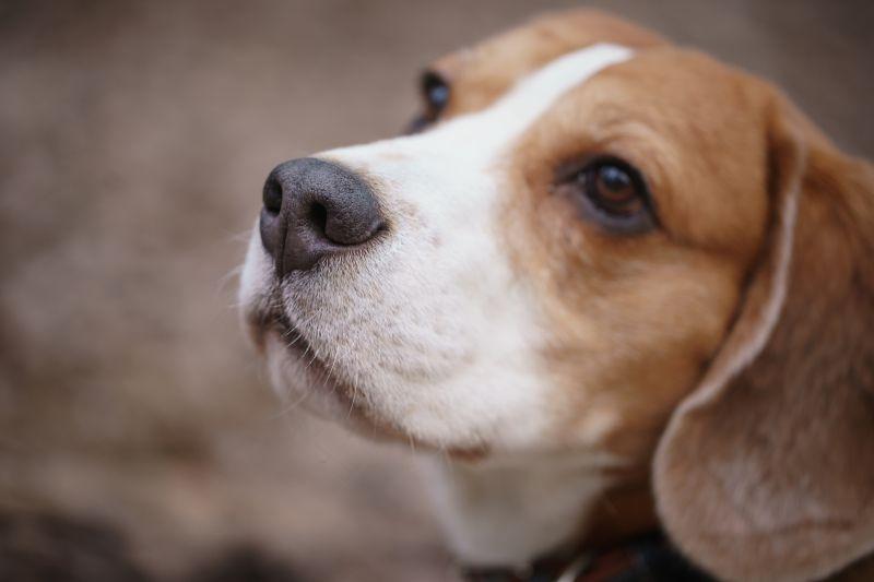 почему у собаки сухой нос
