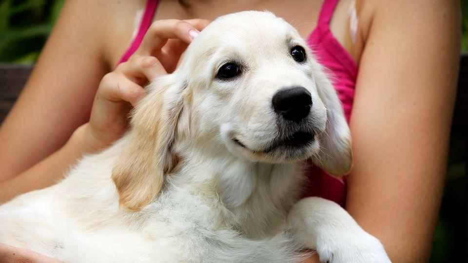 лезет шерсть у собаки что делать