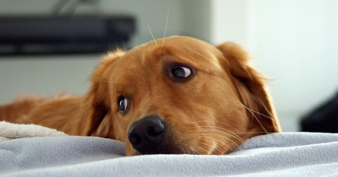 легочные глисты у собак симптомы