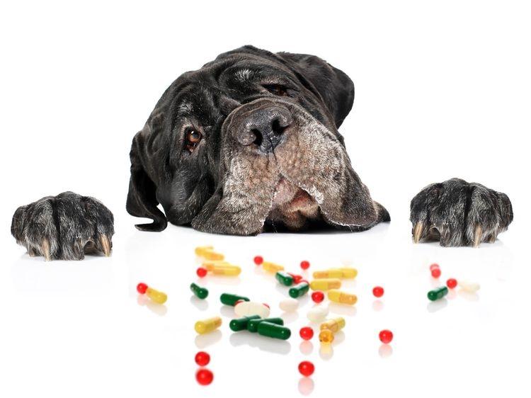 витамины для щенков крупных пород