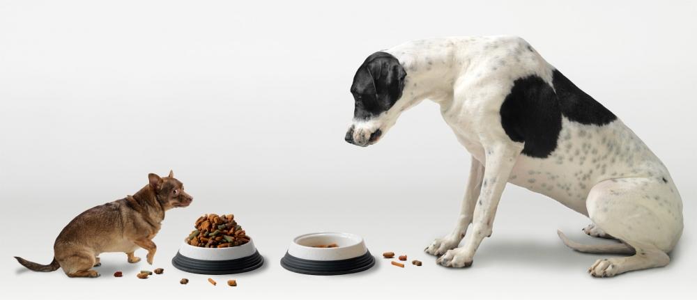 витамины для собак для шерсти и кожи
