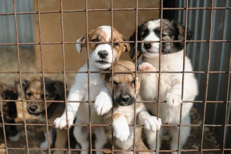 лечить вольерный кашель у собак
