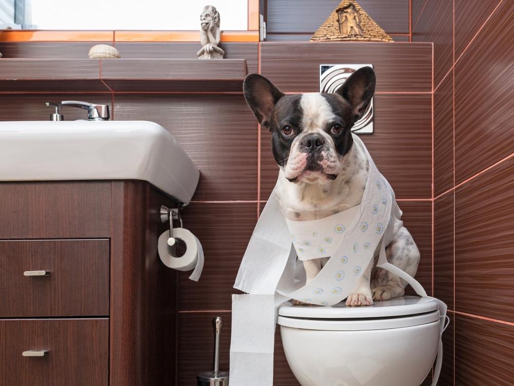 собака не может сходить в туалет