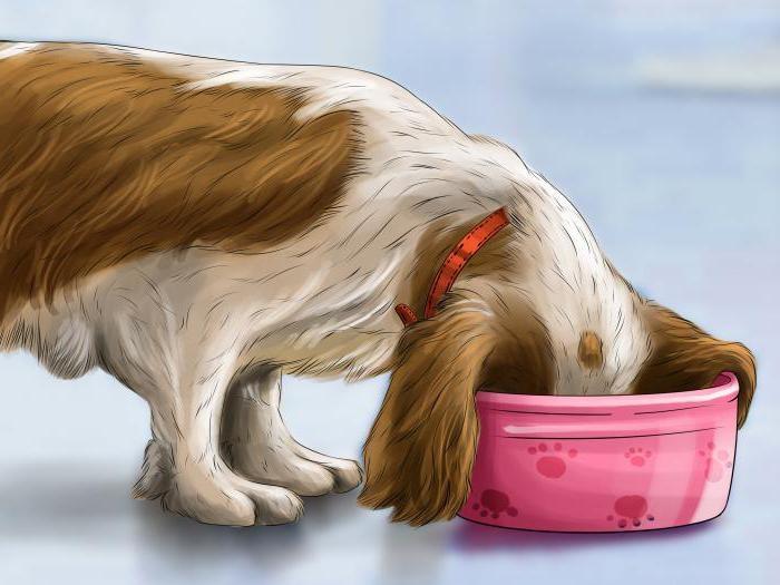 слабительное для собаки в домашних условиях